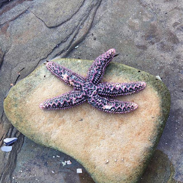 Oh, star fish
